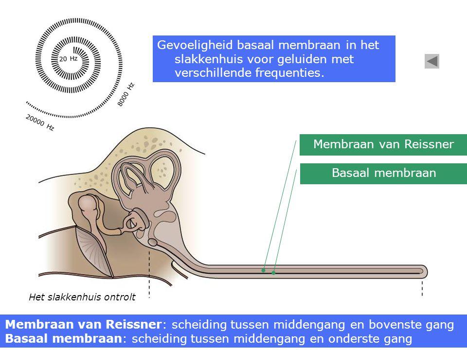 Membraan van Reissner: scheiding tussen middengang en bovenste gang