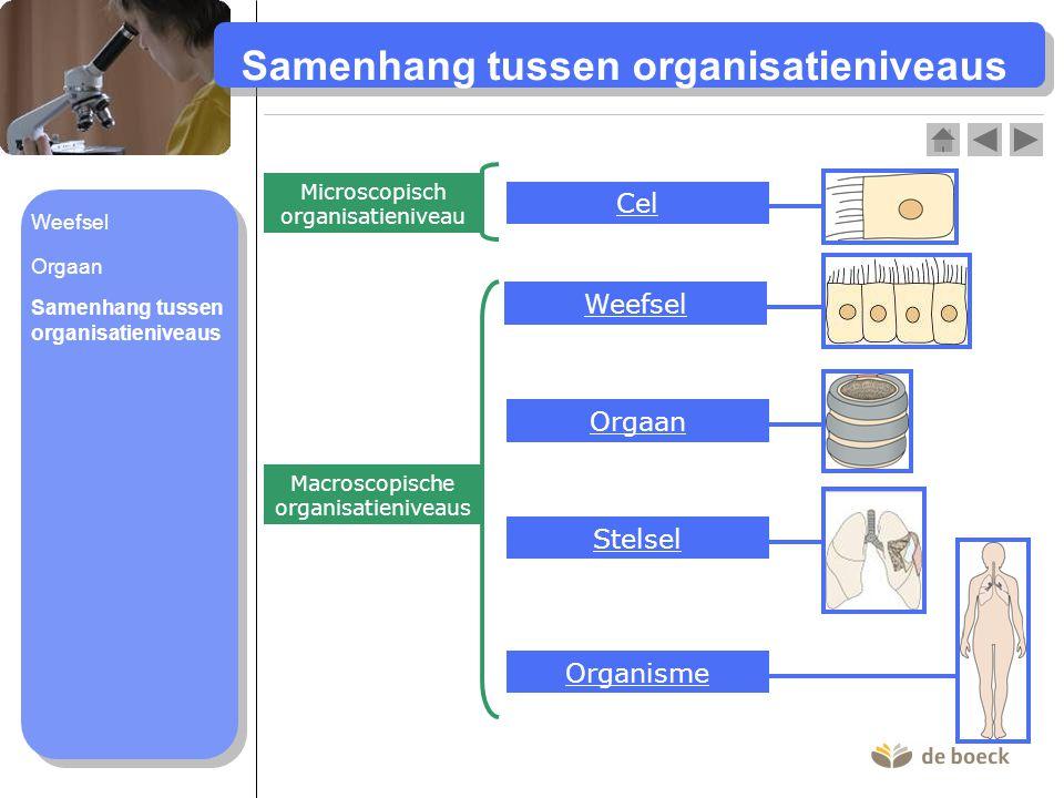 Samenhang tussen organisatieniveaus
