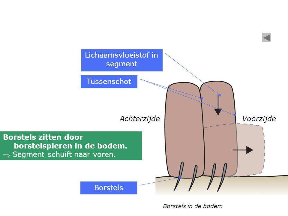 Lichaamsvloeistof in segment