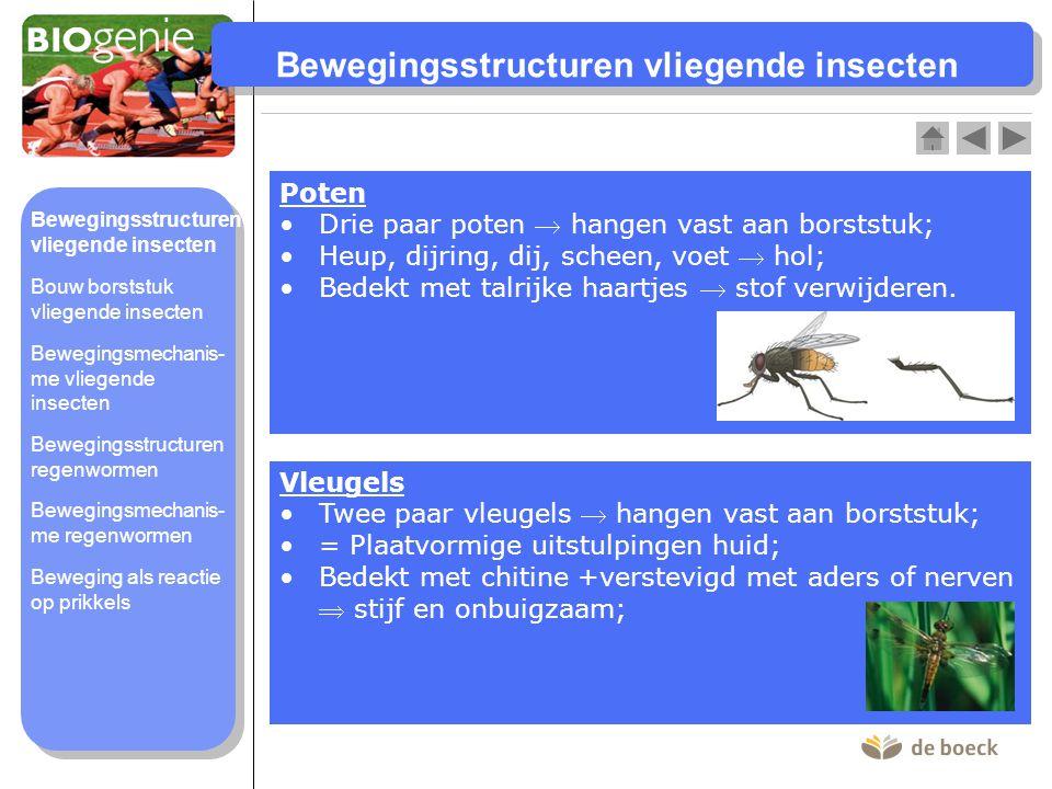 Bewegingsstructuren vliegende insecten
