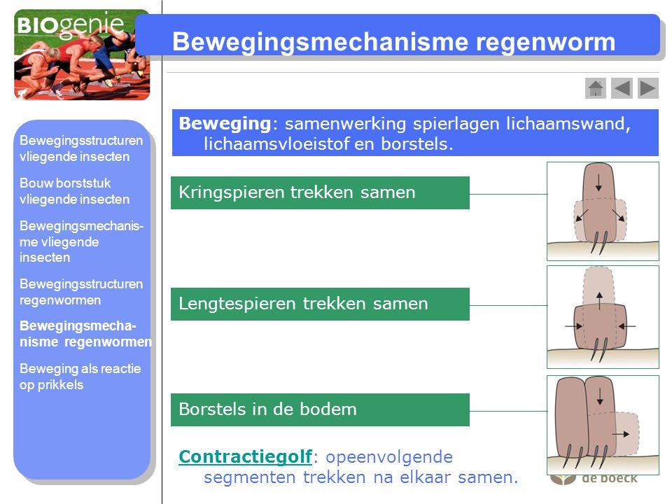 Bewegingsmechanisme regenworm