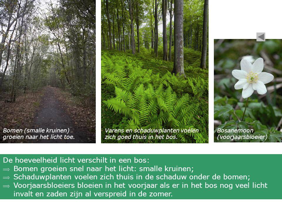 De hoeveelheid licht verschilt in een bos: