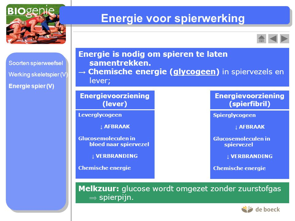 Energie voor spierwerking