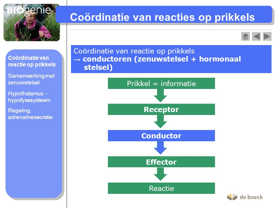 Coördinatie van reacties op prikkels