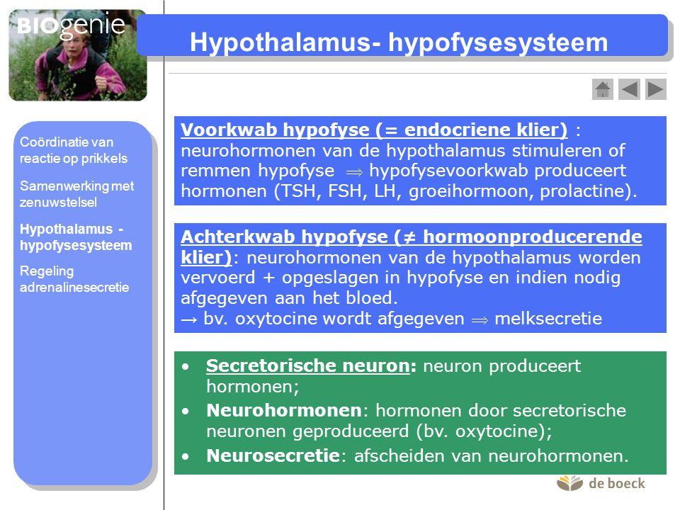 Hypothalamus- hypofysesysteem
