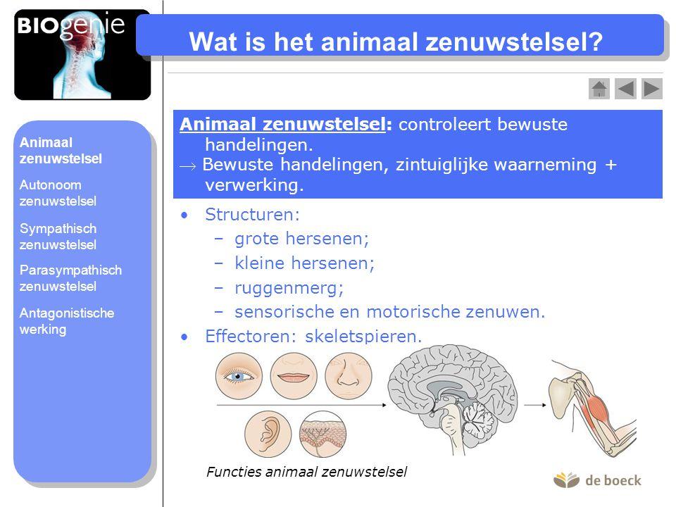 Wat is het animaal zenuwstelsel