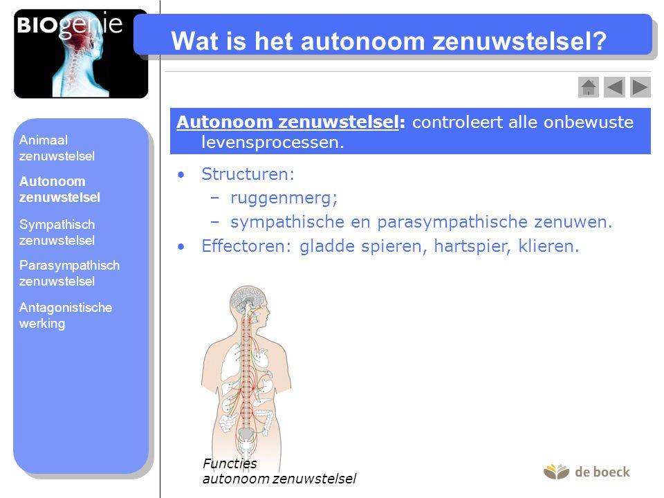 Wat is het autonoom zenuwstelsel