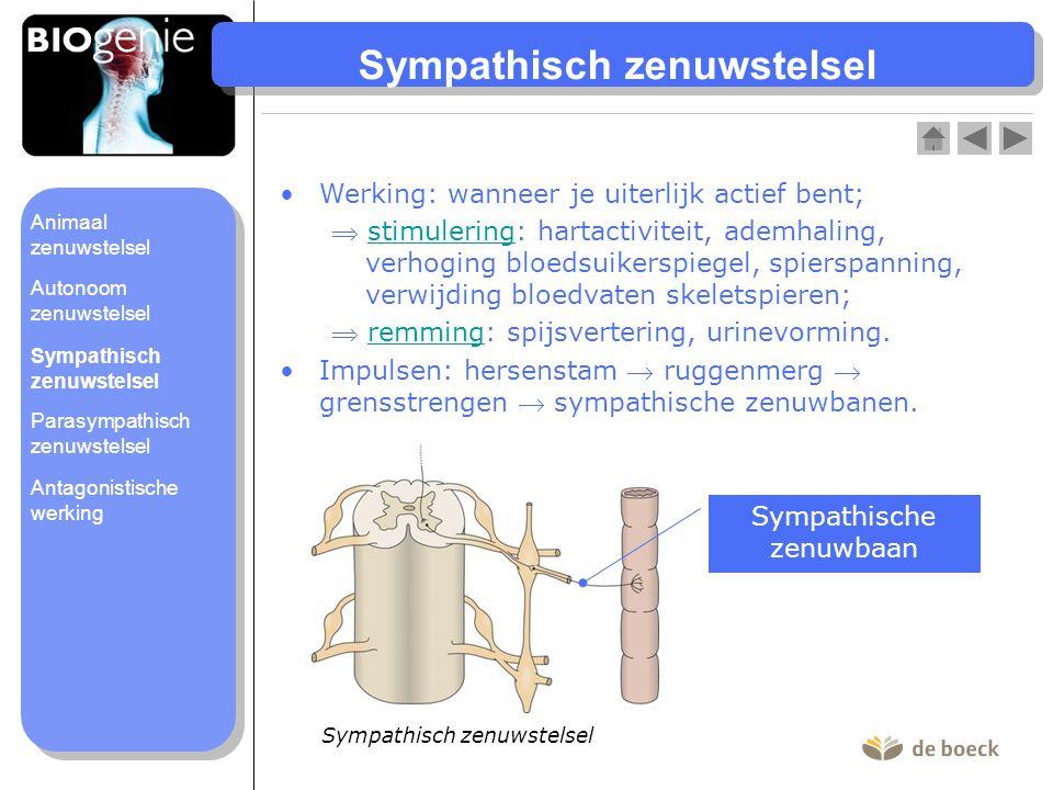 Sympathisch zenuwstelsel