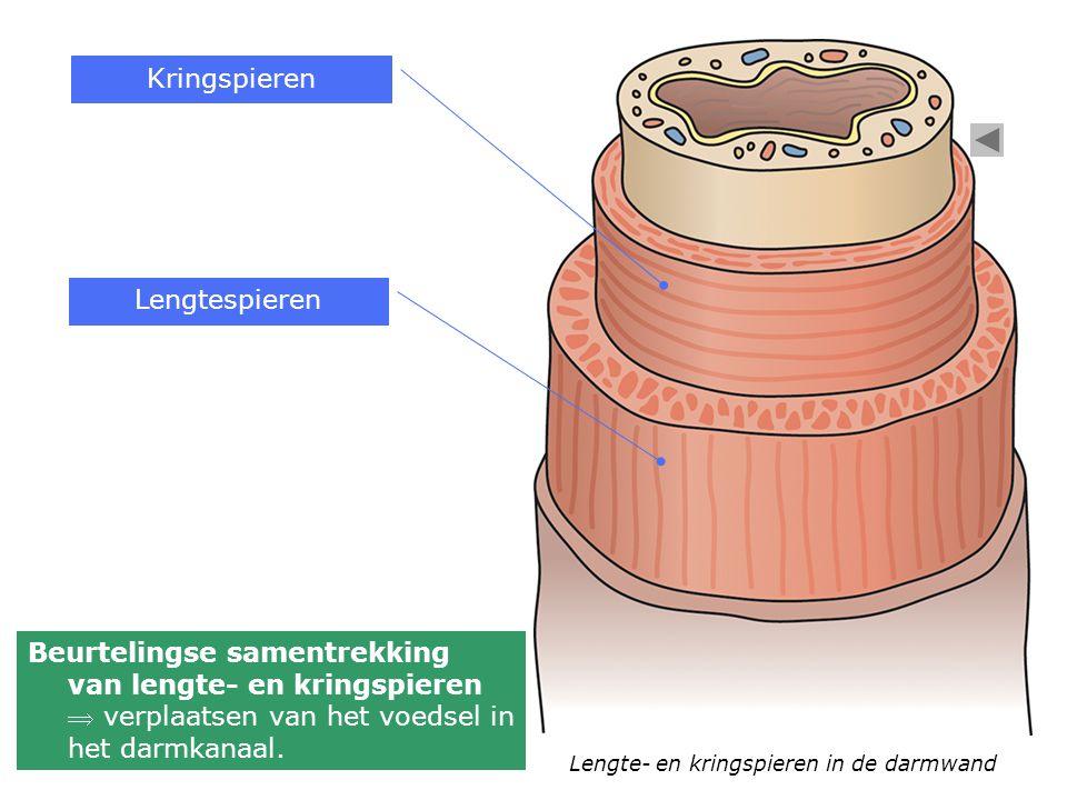 Kringspieren Lengtespieren
