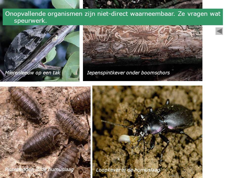 Onopvallende organismen zijn niet-direct waarneembaar