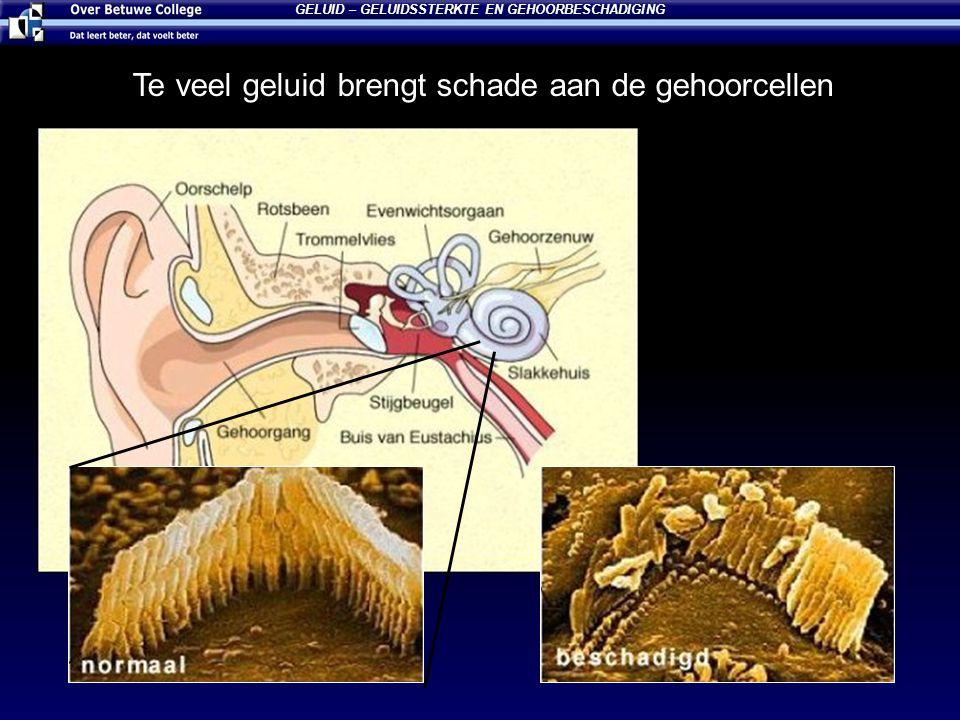 GELUID – GELUIDSSTERKTE EN GEHOORBESCHADIGING