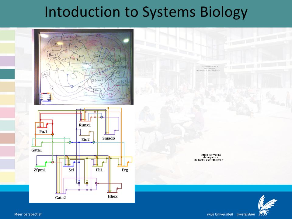 Intoduction to Systems Biology