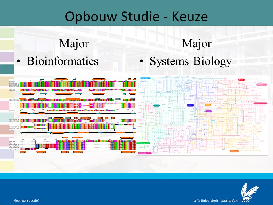 Opbouw Studie - Keuze Major Bioinformatics Major Systems Biology