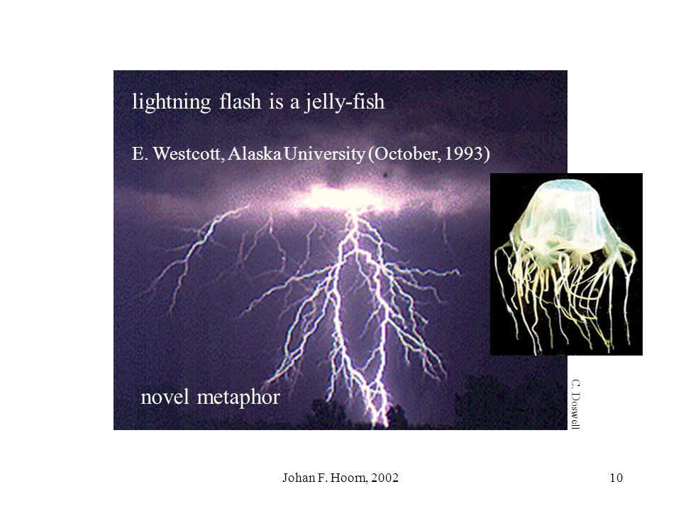 lightning flash is a jelly-fish