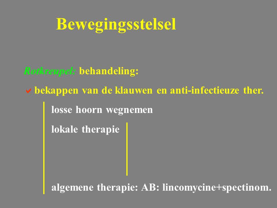 Bewegingsstelsel Rotkreupel: behandeling: