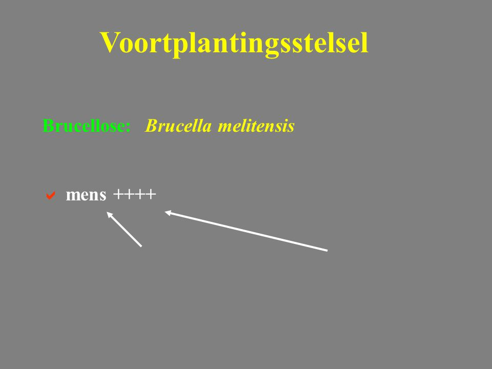 Voortplantingsstelsel