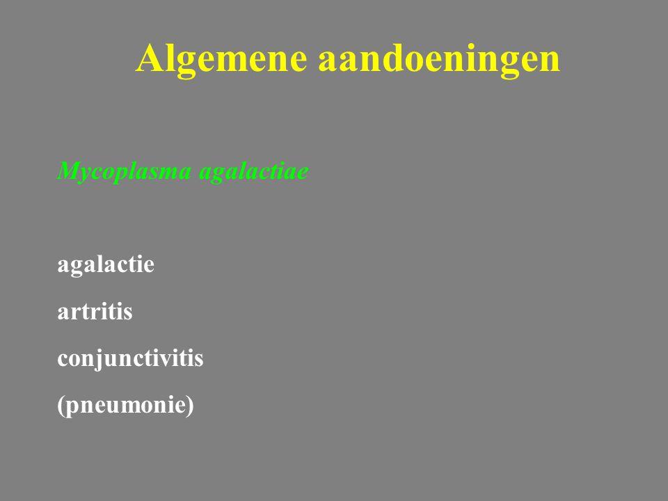 Algemene aandoeningen