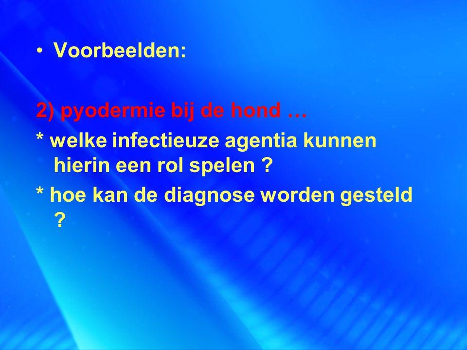 Voorbeelden: 2) pyodermie bij de hond … * welke infectieuze agentia kunnen hierin een rol spelen