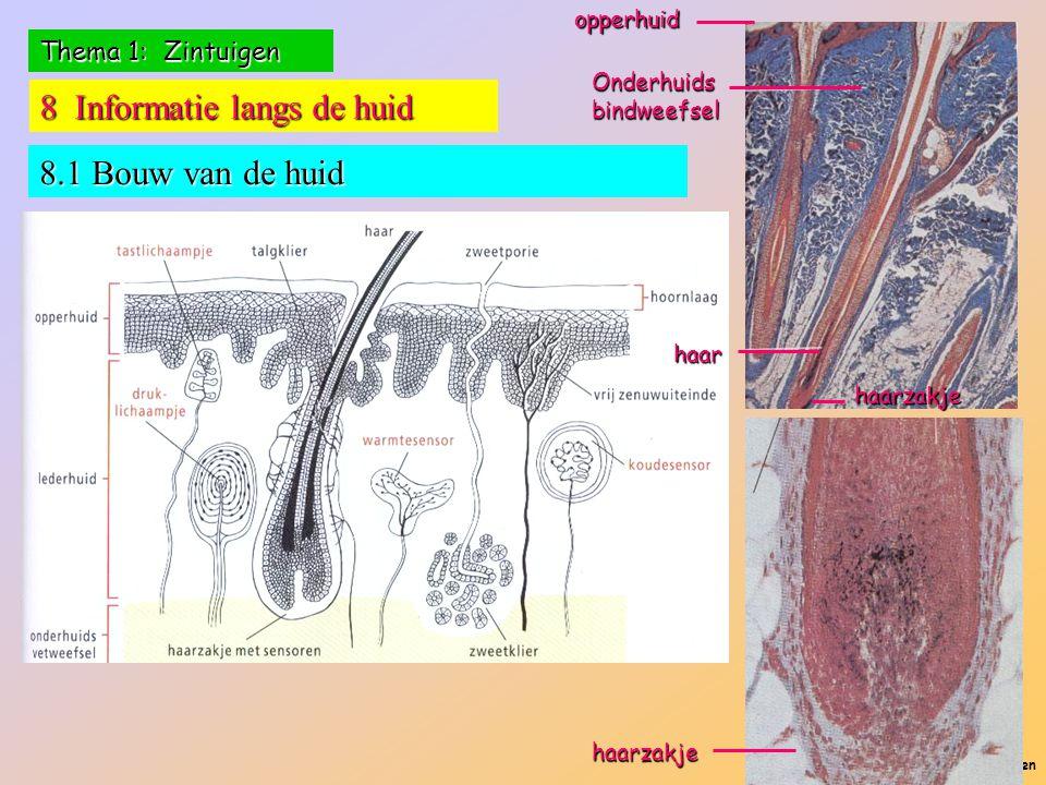 8 Informatie langs de huid