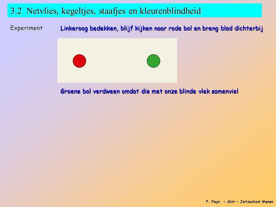 3.2 Netvlies, kegeltjes, staafjes en kleurenblindheid