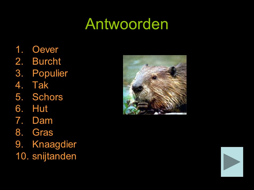 Antwoorden Oever Burcht Populier Tak Schors Hut Dam Gras Knaagdier