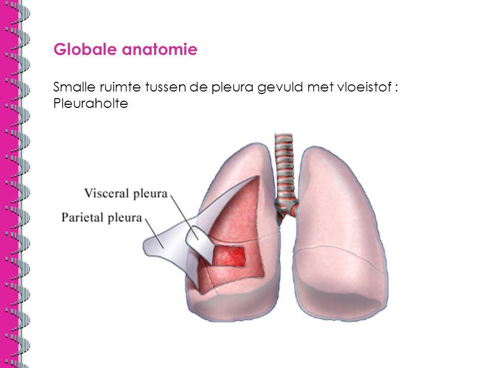 Globale anatomie Smalle ruimte tussen de pleura gevuld met vloeistof : Pleuraholte.