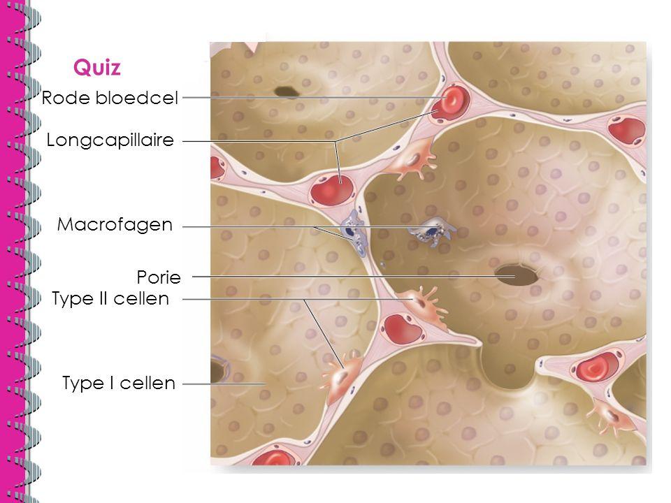 Quiz Rode bloedcel Longcapillaire Macrofagen Porie Type II cellen
