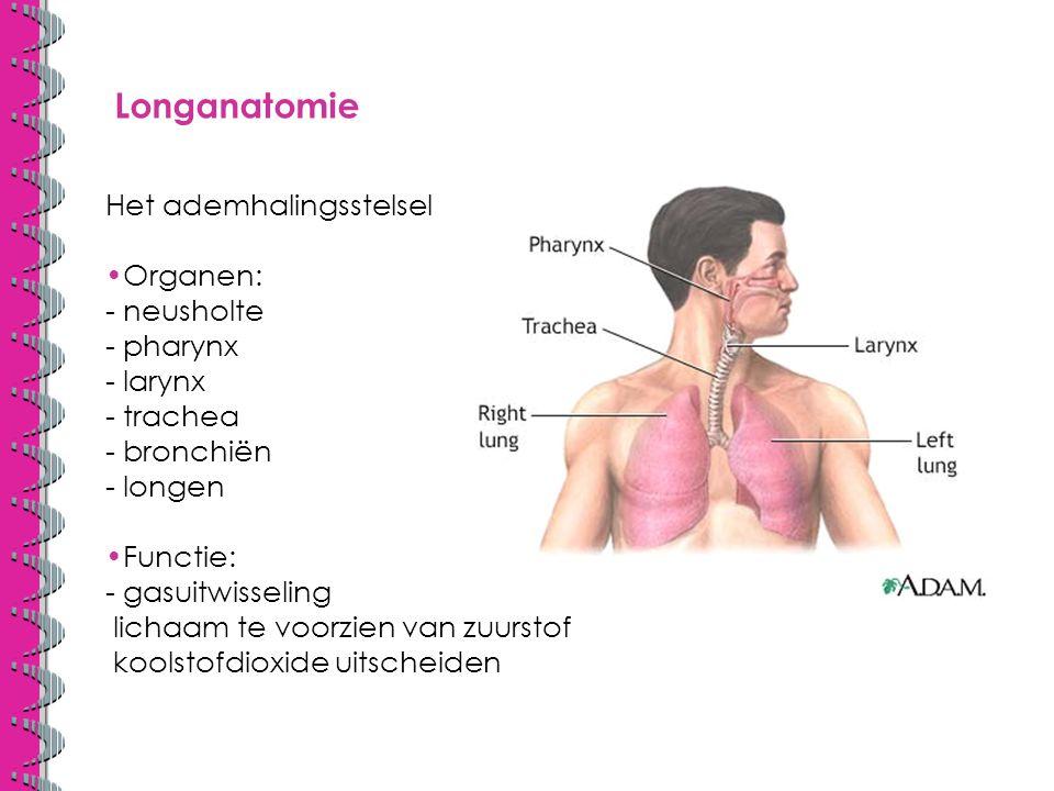 Longanatomie Het ademhalingsstelsel Organen: - neusholte - pharynx