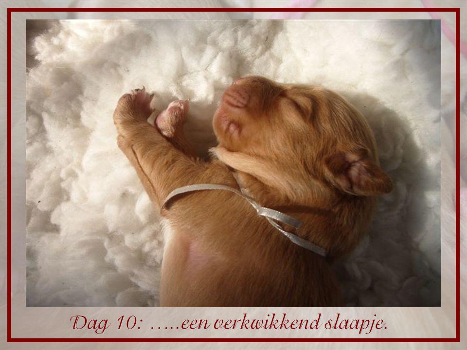 Dag 10: …..een verkwikkend slaapje.