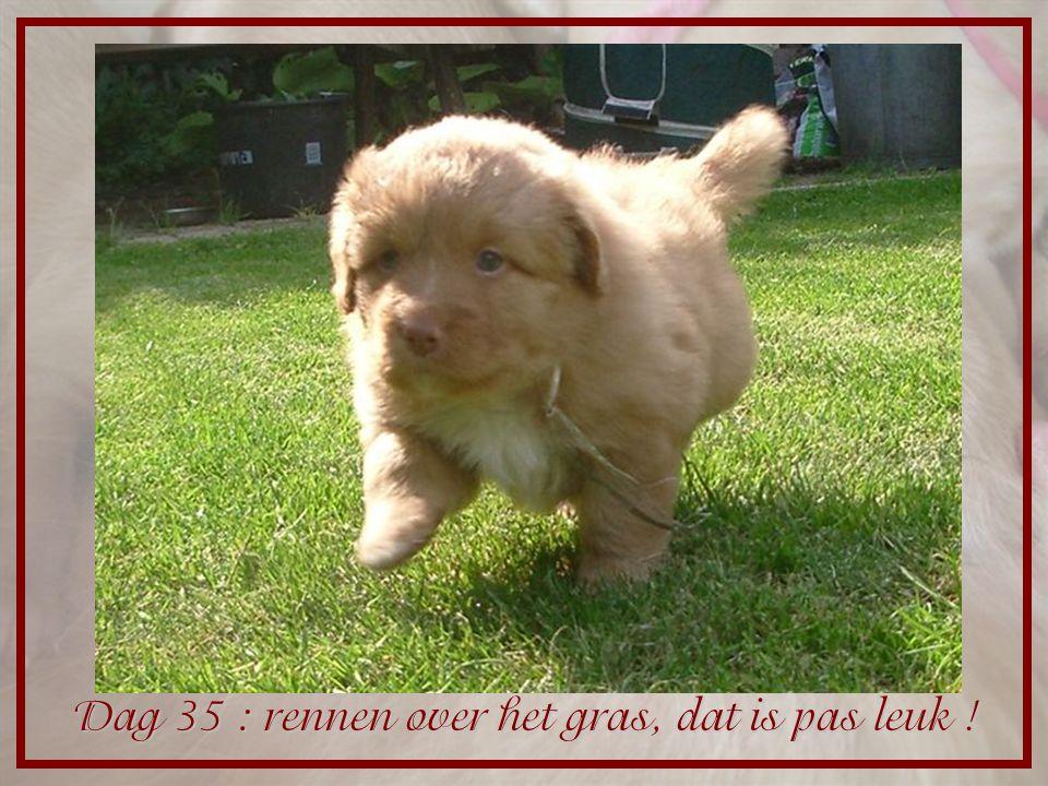Dag 35 : rennen over het gras, dat is pas leuk !