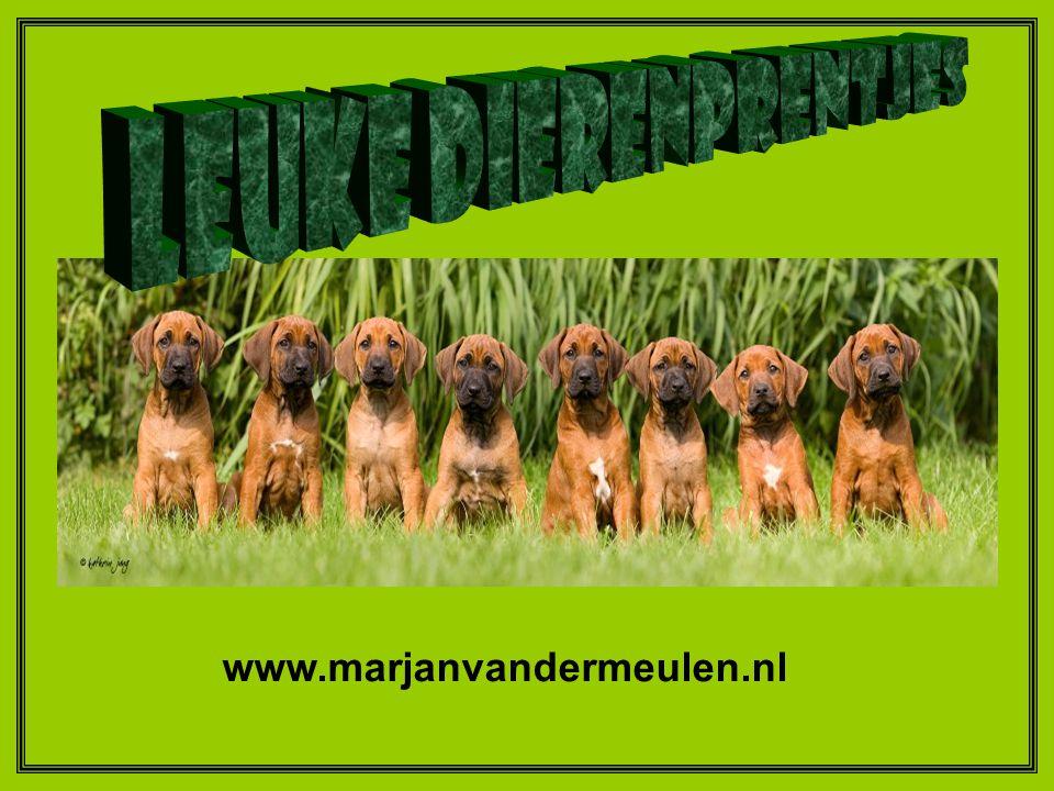 Leuke Dierenprentjes www.marjanvandermeulen.nl