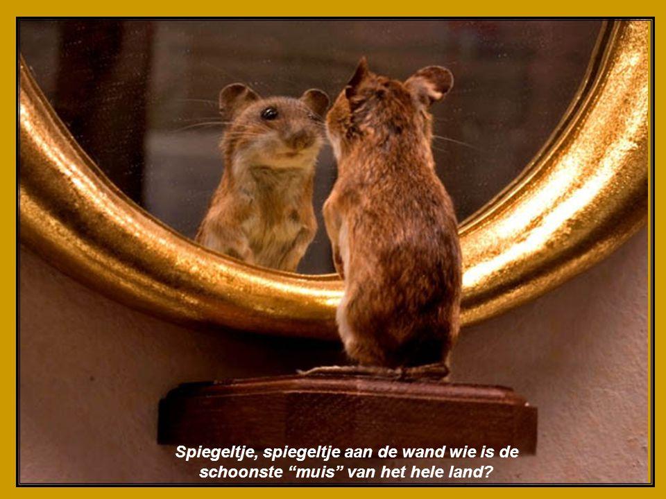 Spiegeltje, spiegeltje aan de wand wie is de schoonste muis van het hele land