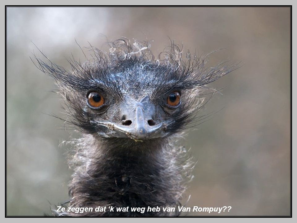 Ze zeggen dat 'k wat weg heb van Van Rompuy