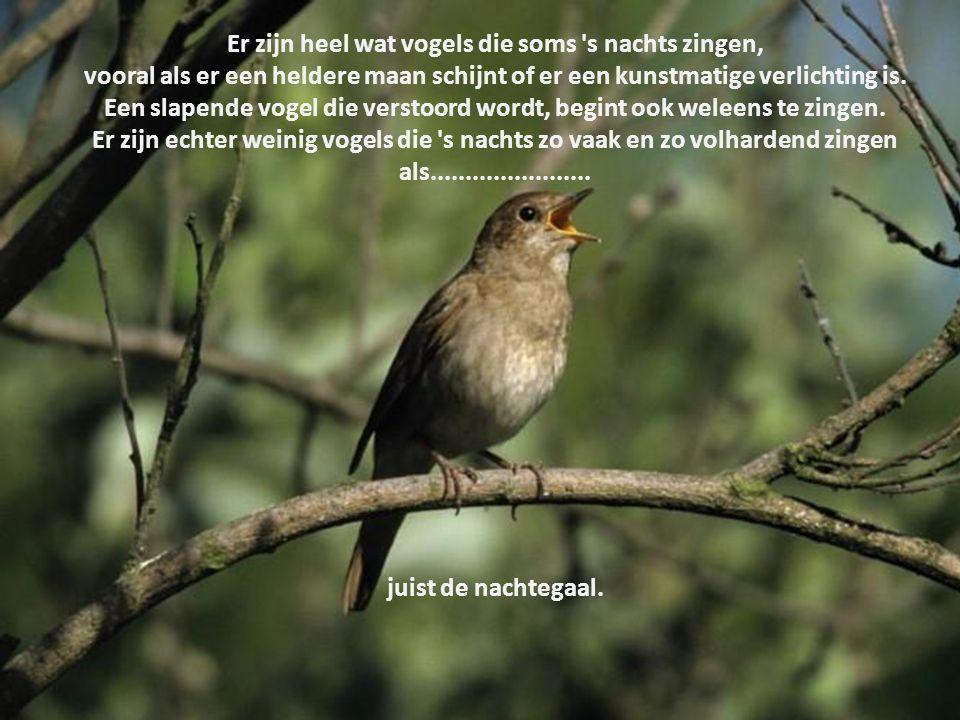 Vogels s nachts fluiten