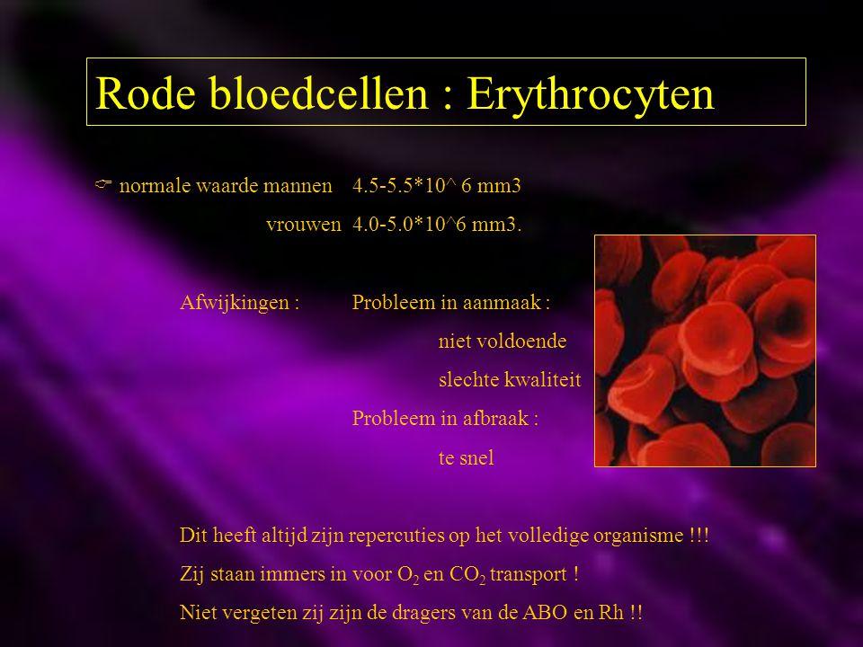 Rode bloedcellen : Erythrocyten