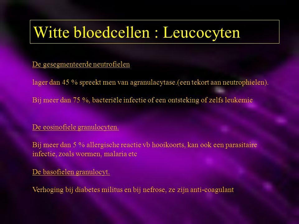 Witte bloedcellen : Leucocyten