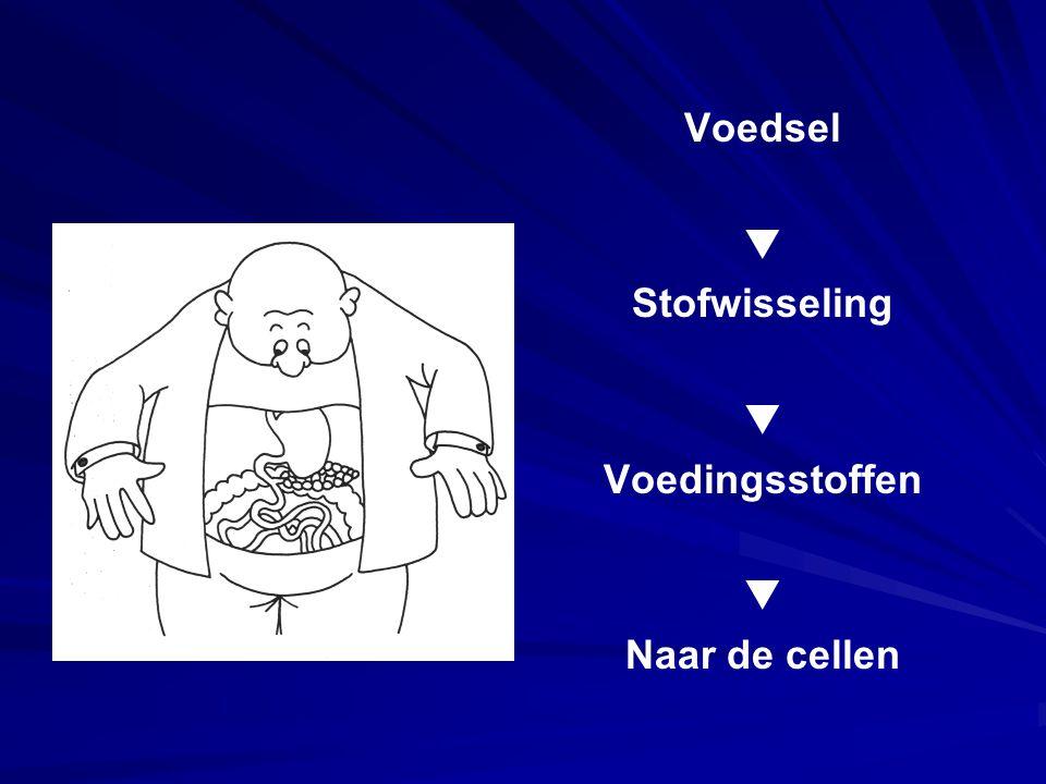 Voedsel q Stofwisseling Voedingsstoffen Naar de cellen