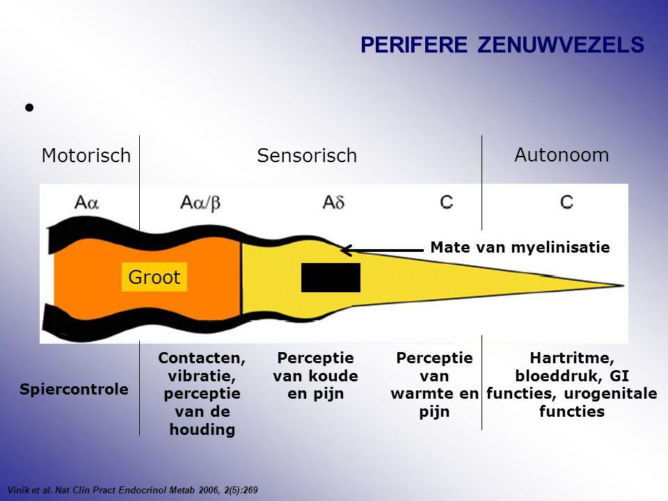 PERIFERE ZENUWVEZELS Motorisch Sensorisch Autonoom Groot Klein