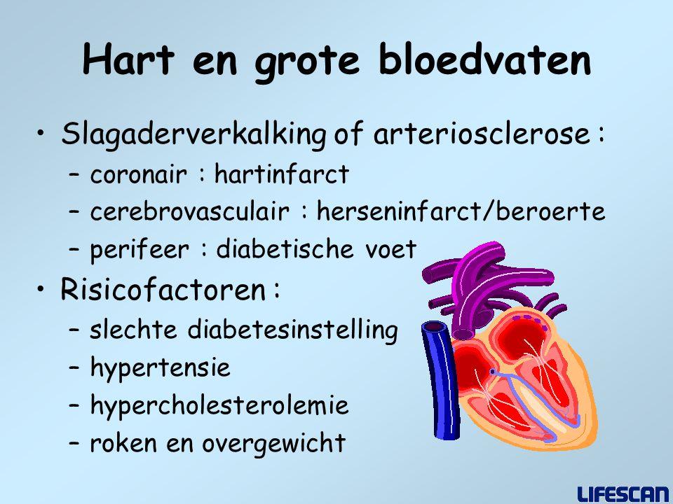 Hart en grote bloedvaten