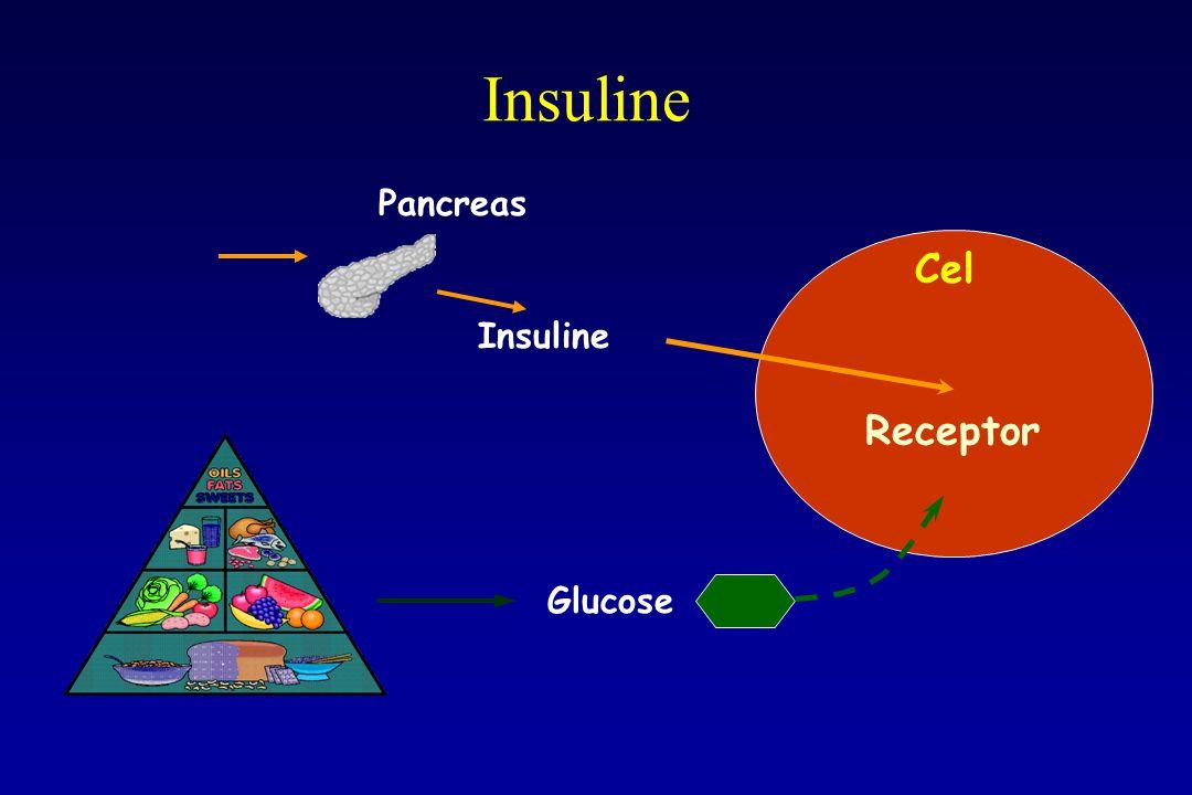Insuline Cel Receptor Pancreas Insuline Glucose