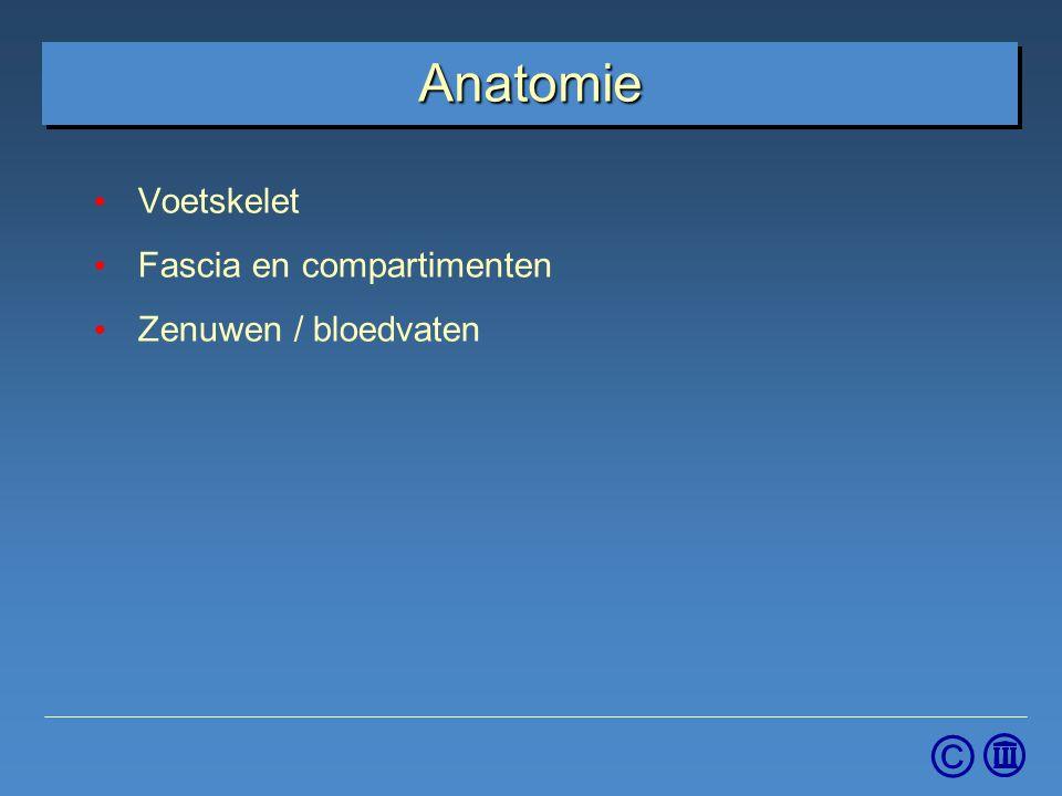 Voetskelet Fascia en compartimenten Zenuwen / bloedvaten