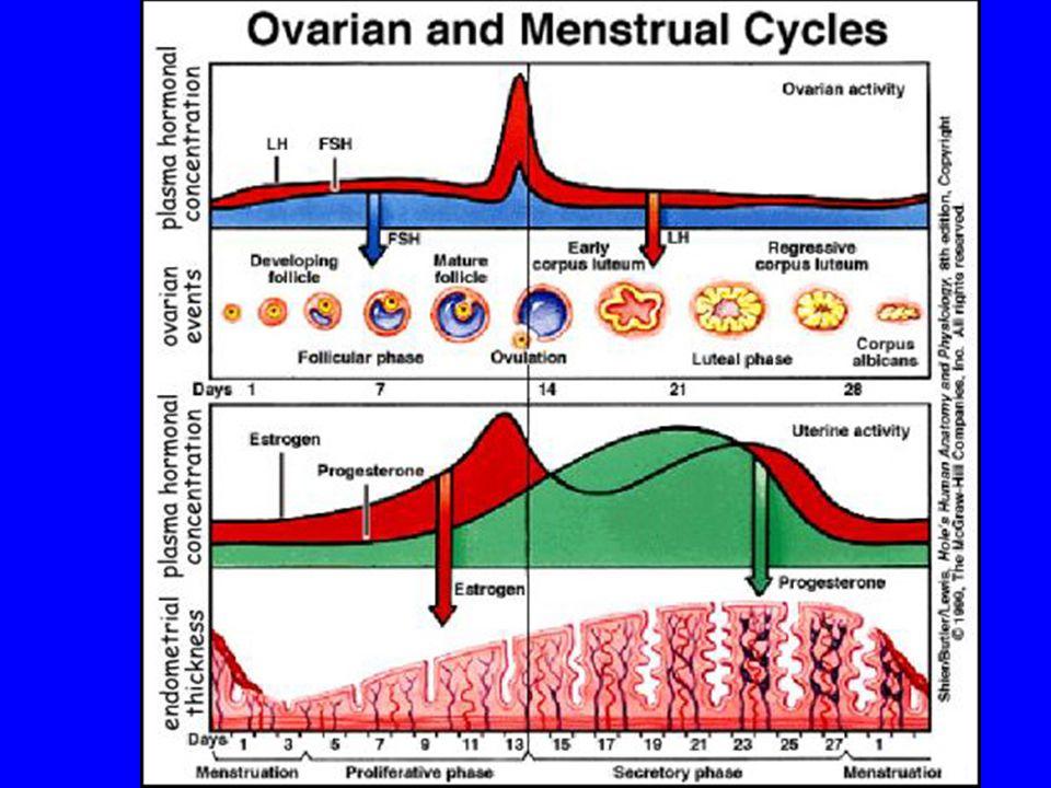 SAMENWERKING VAN HORMONEN > REGELING VAN COMPLEXE FENOMENEN ZOALS MENSTRUELE CYCLUS