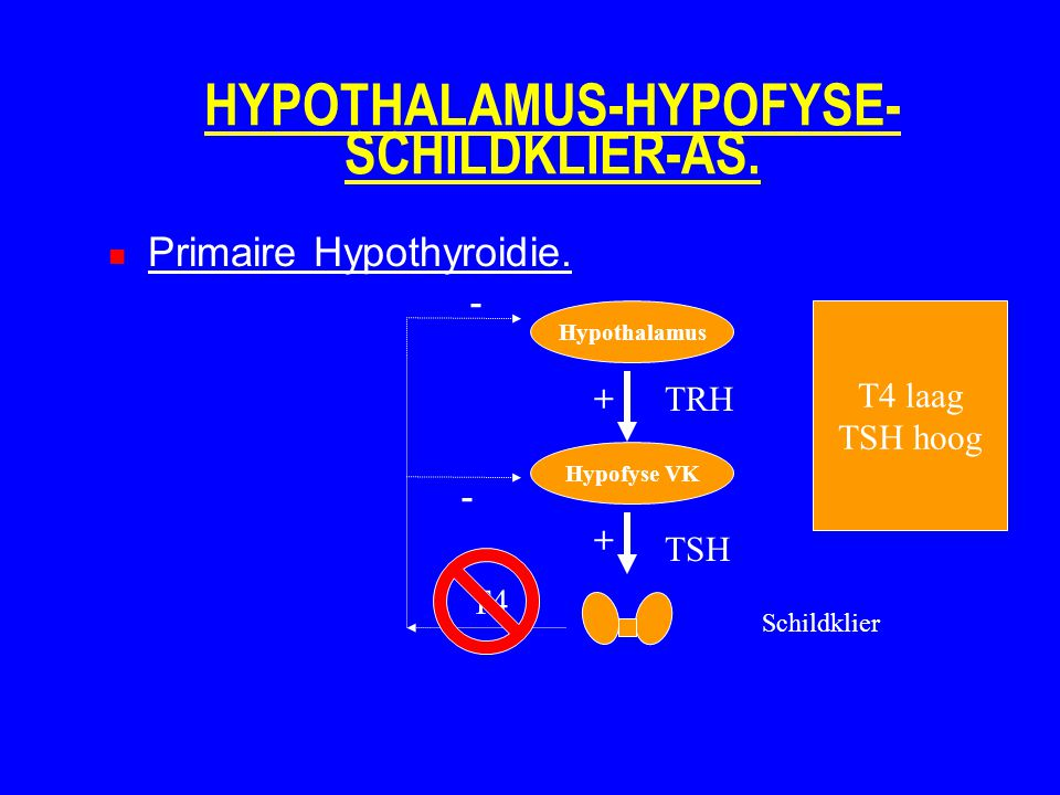 HYPOTHALAMUS-HYPOFYSE-SCHILDKLIER-AS.