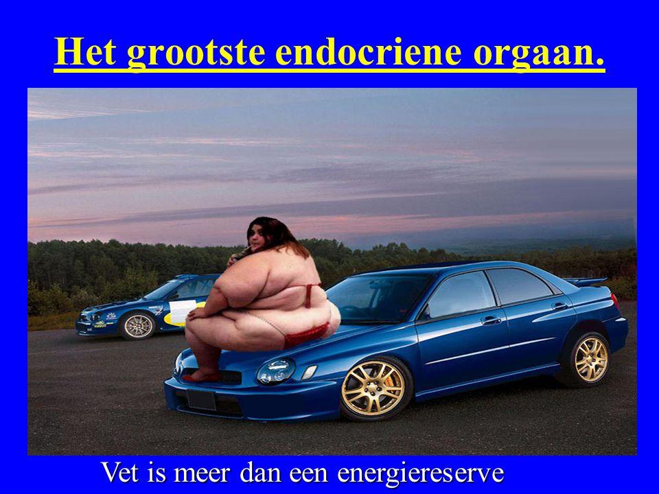 Het grootste endocriene orgaan.