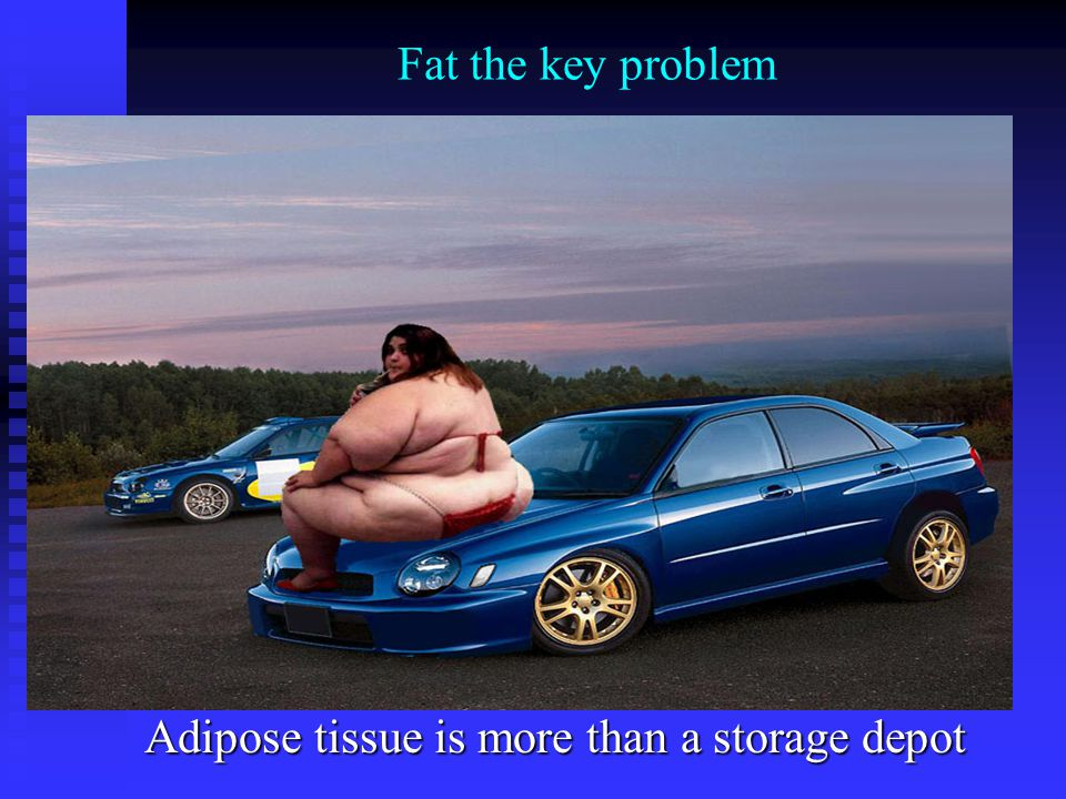 Adipose tissue is more than a storage depot