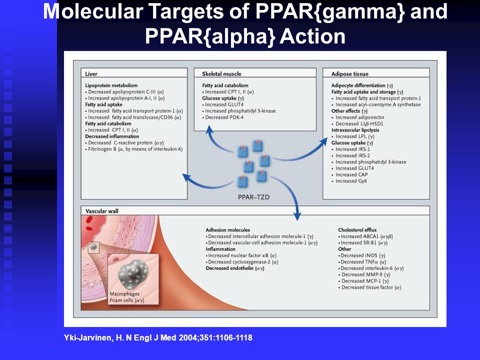 Molecular Targets of PPAR{gamma} and PPAR{alpha} Action