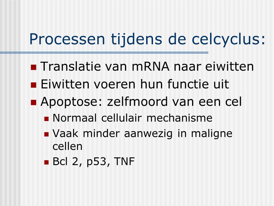 Processen tijdens de celcyclus: