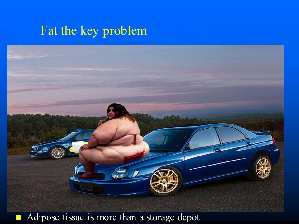 Fat the key problem Adipose tissue is more than a storage depot