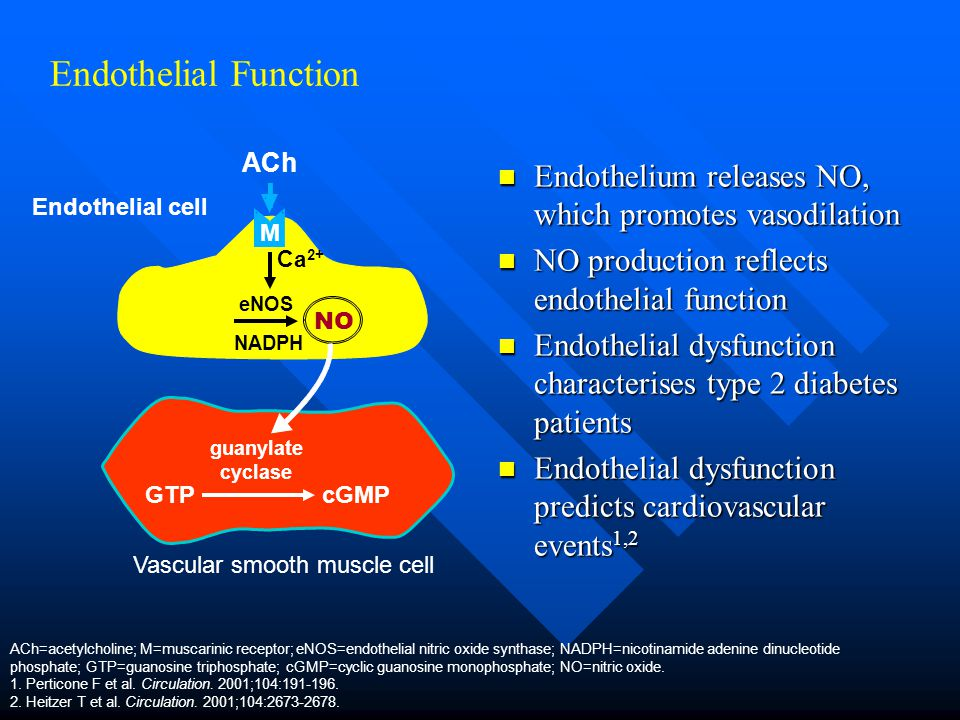 Endothelial Function ACh. M. Endothelium releases NO, which promotes vasodilation. NO production reflects endothelial function.
