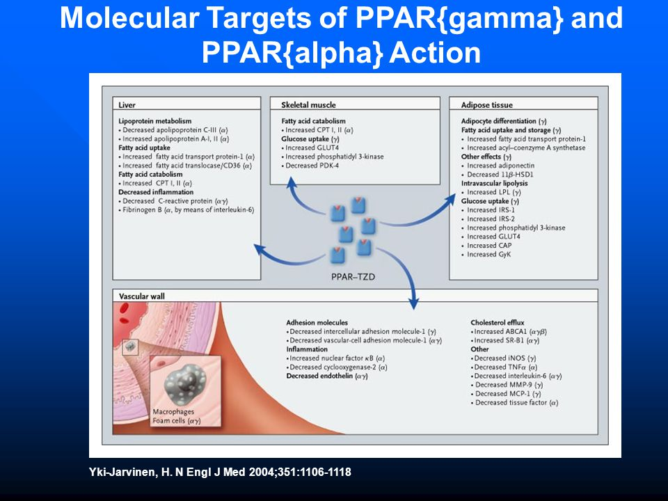 Molecular Targets of PPAR{gamma} and PPAR{alpha} Action